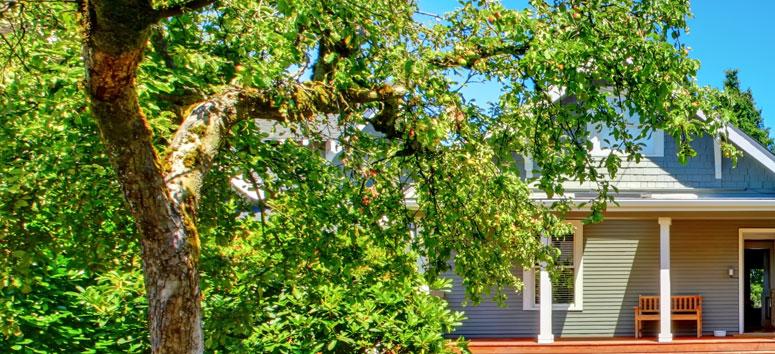 neighbour dispute trees