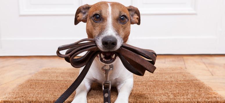 strata scheme pet laws